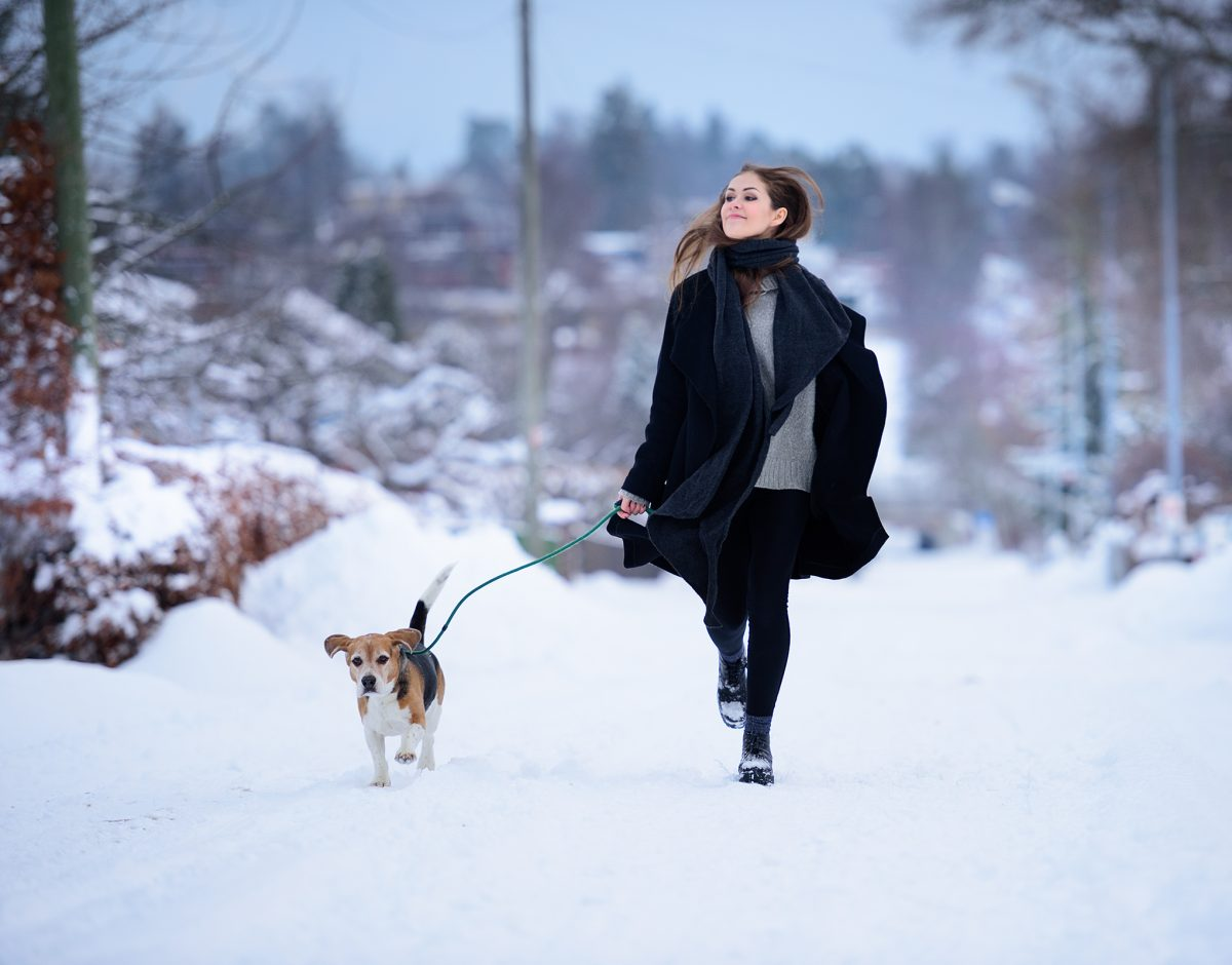 A dog on a leash in the snow.