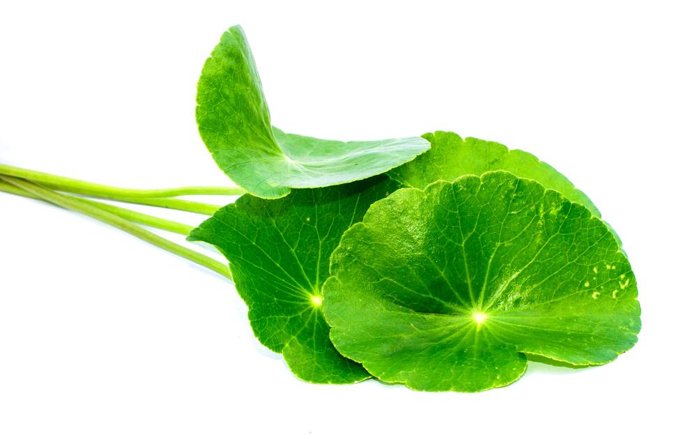herbal medicine Eczema