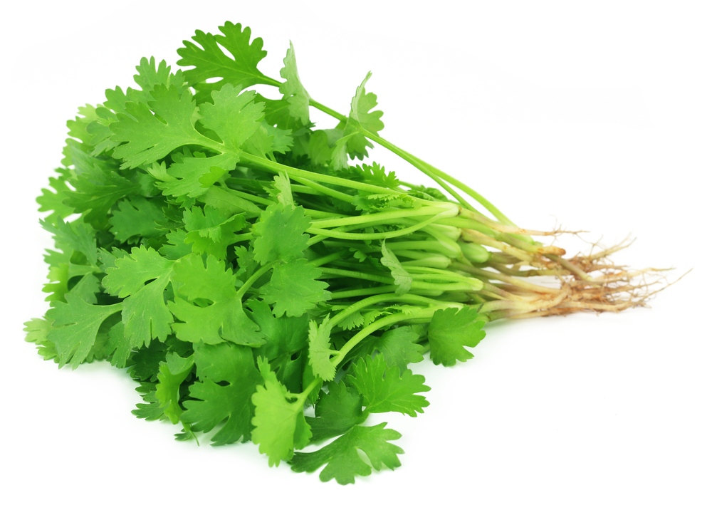 coriander remedies for mouth sores