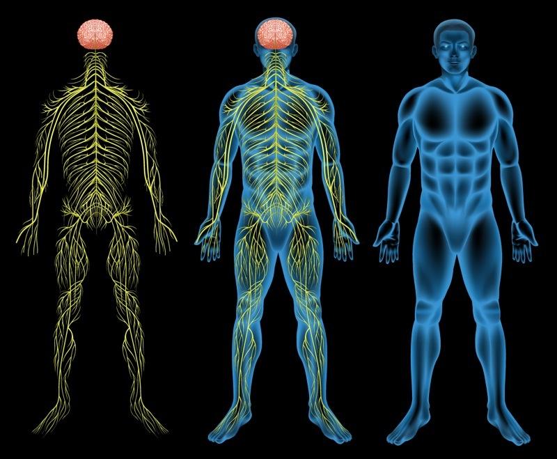 nerves vitamin E