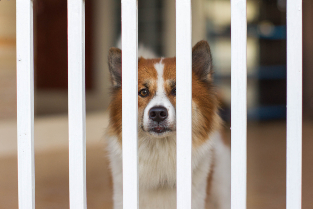 seclusion kennel cough