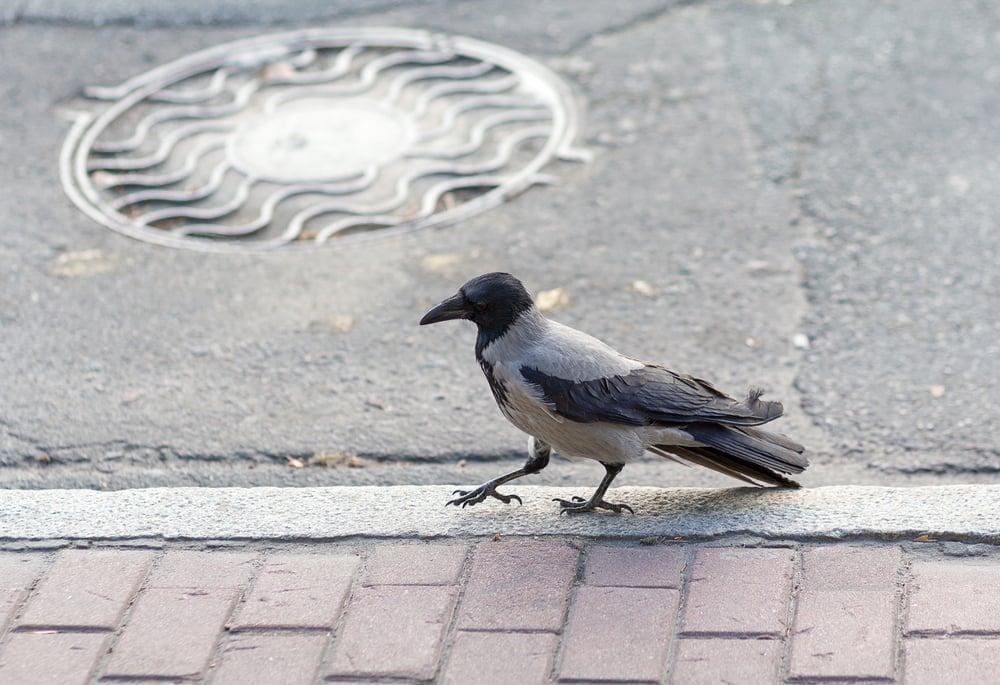 phobias birds
