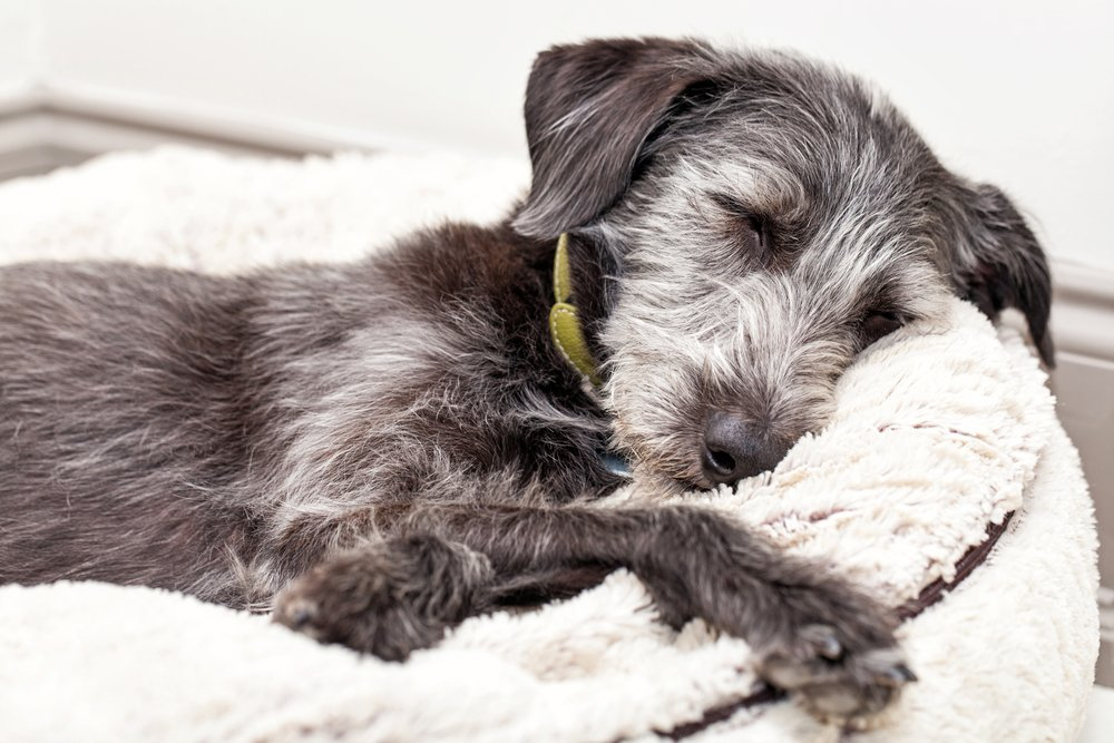 kennel cough signs