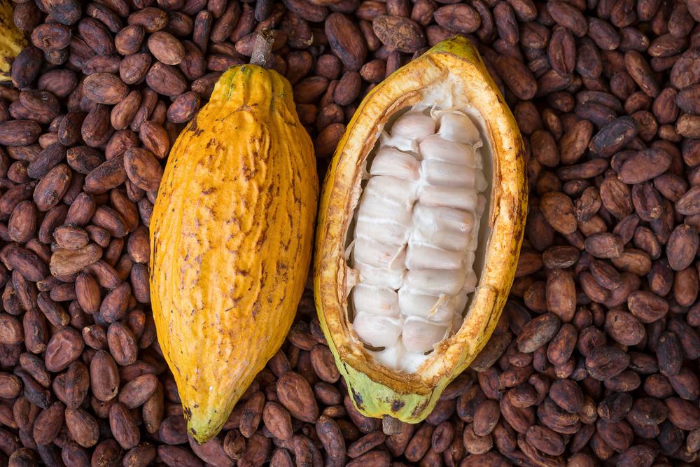 cocoa raw