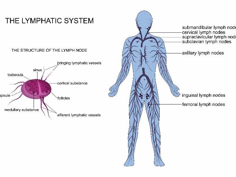 Lymphoedema system