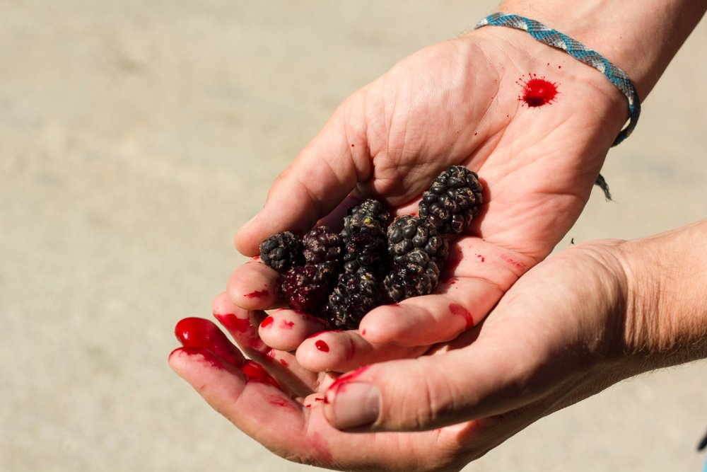 health benefits Mulberry