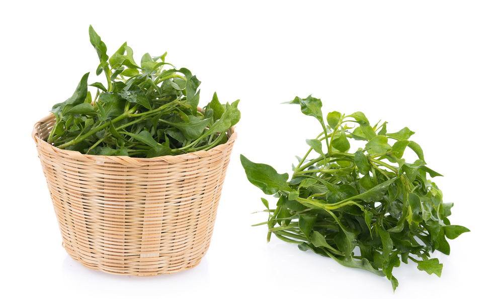Bone Health Protection Watercress