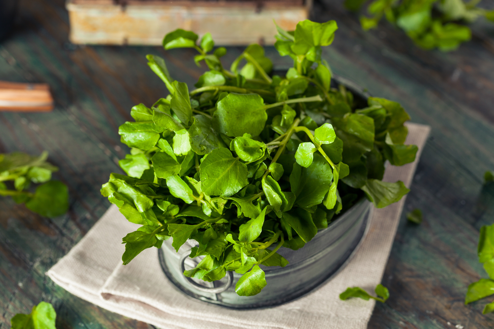 Boost Brain Health Watercress