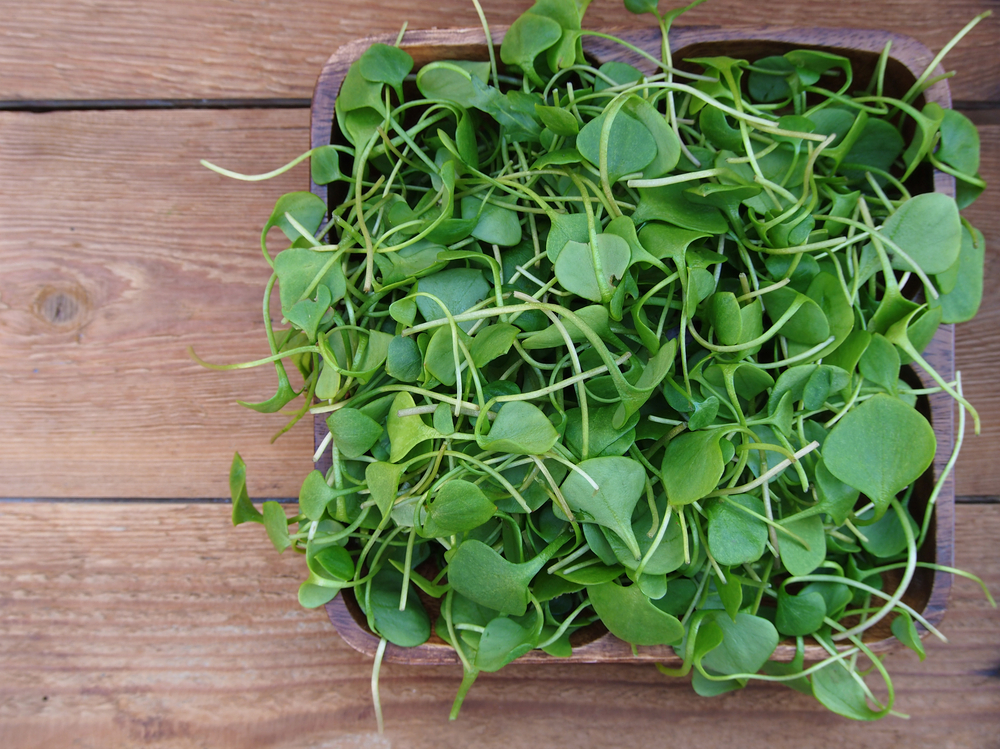 Boost Immune System Function Watercress
