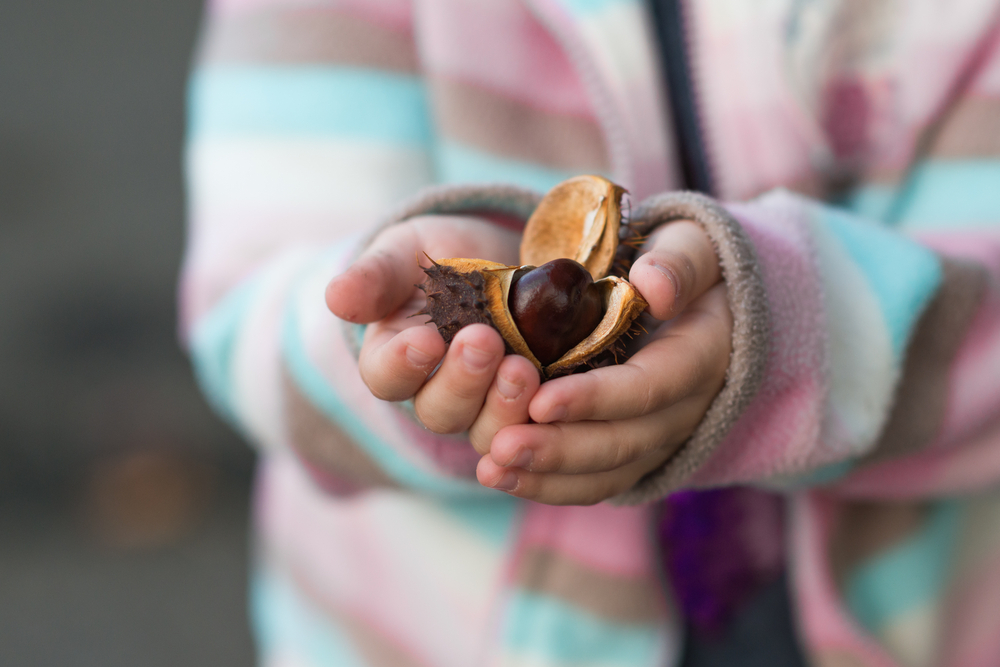 Chestnuts Help Prevent Type 2 Diabetes