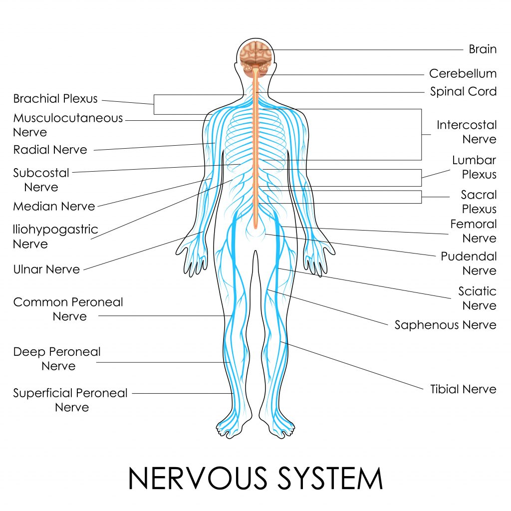 Nervous system stimulation