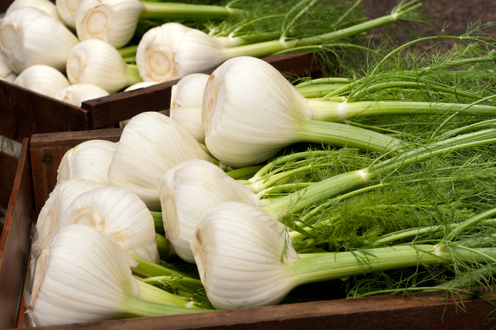 Promote Weight Loss Fennel