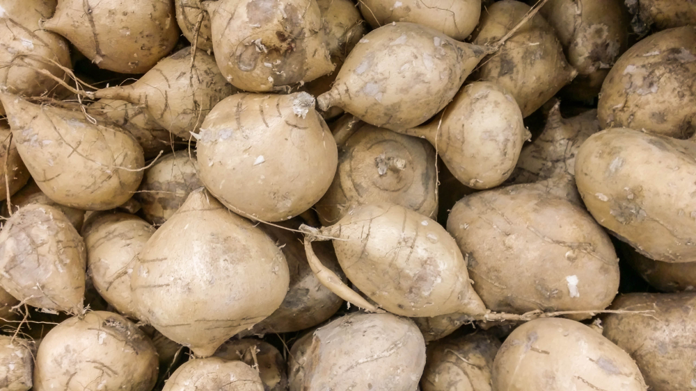 The Powers of Jicama Extract