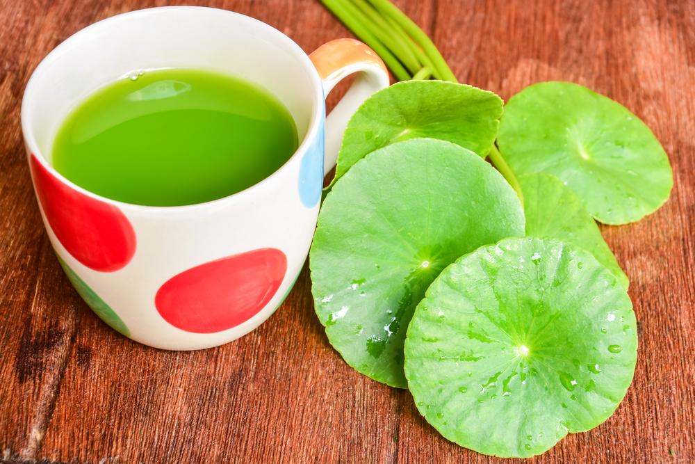 Amazing Health Benefits of Gotu Kola