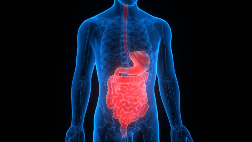 Fenugreek digestion