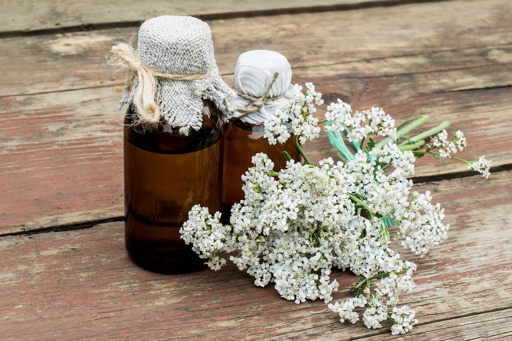 10 Surprising Health Benefits of Yarrow