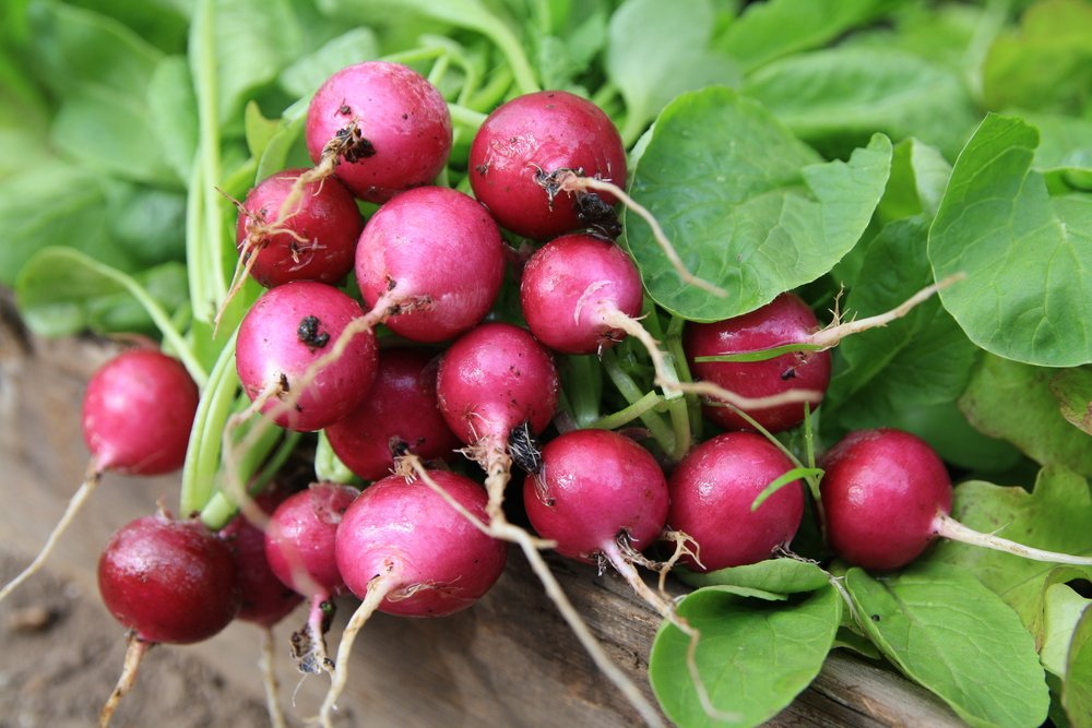 Radish health benefits