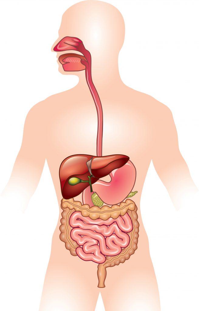 Aids digestion Kombu