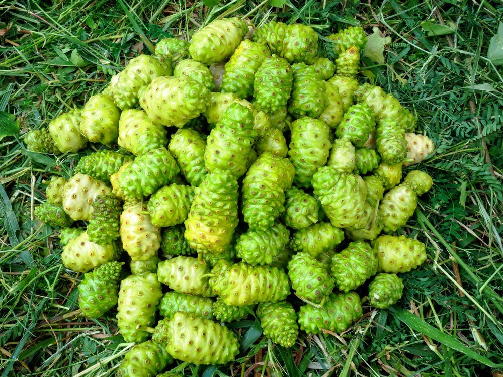 Helps Reduce Cholesterol noni juice
