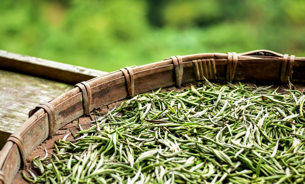 Hopes that white tea could slow down aging