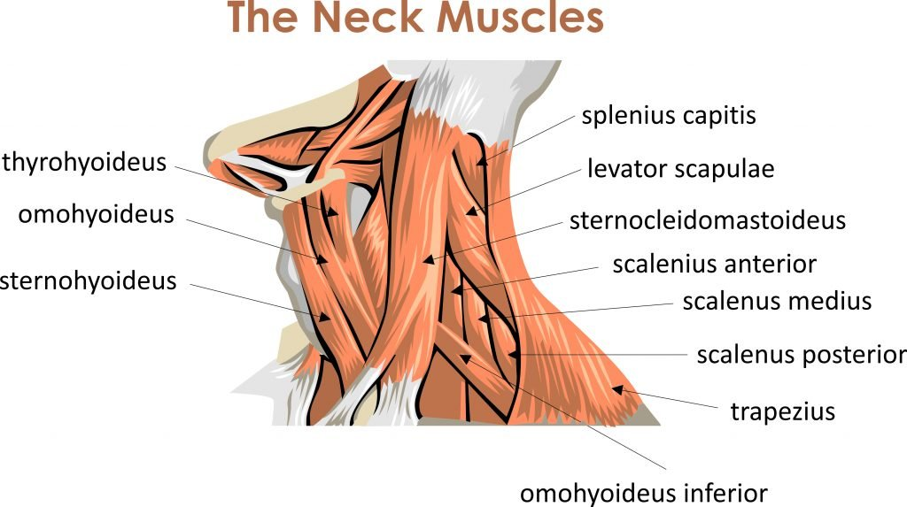 Physiotherapy for Throat Muscles