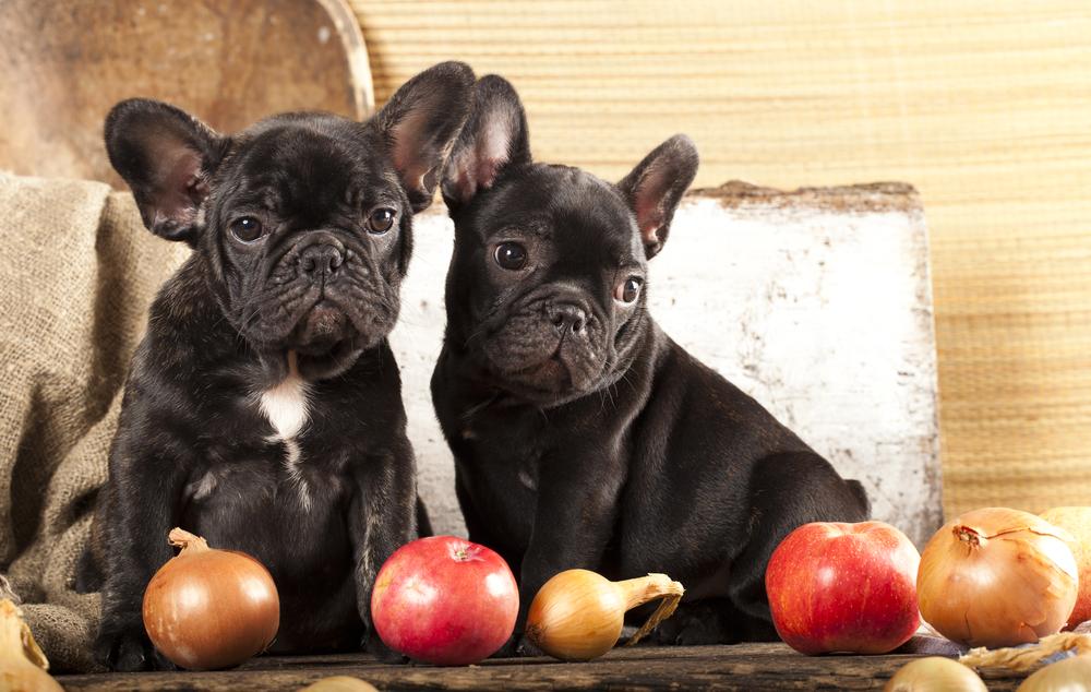 garlic Dogs poison