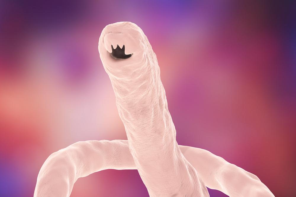 hookworms canine Hookworms