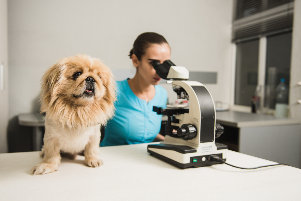 canine Hookworms dogs