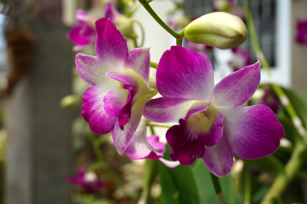 orchid air purifying plant