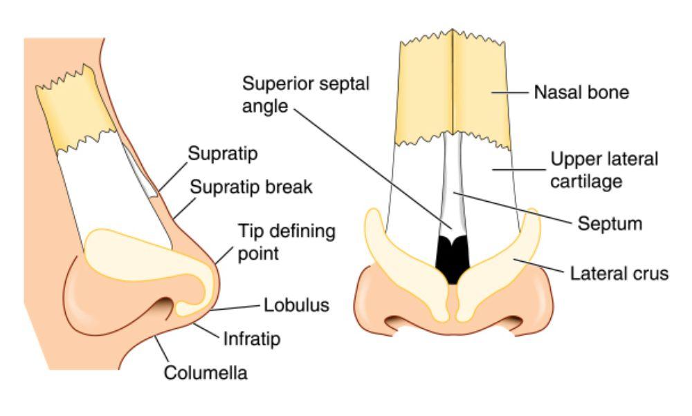 plumbing nasal polyps