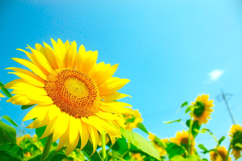 vitamin E sunflower seed butter