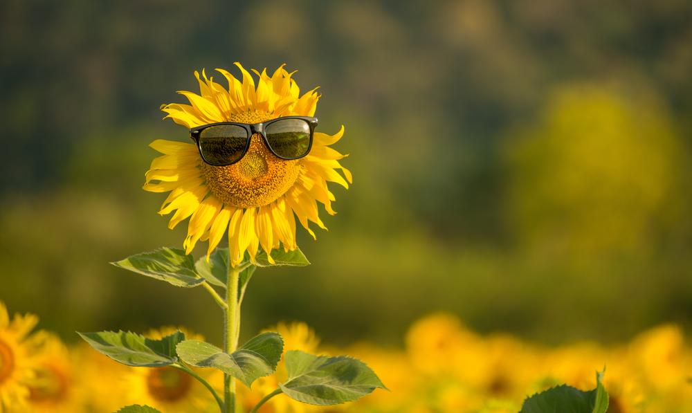 fats sunflower seed butter