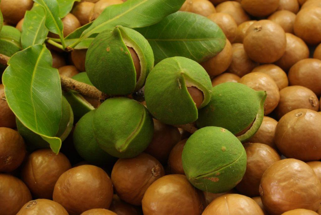 weight loss macadamia nuts