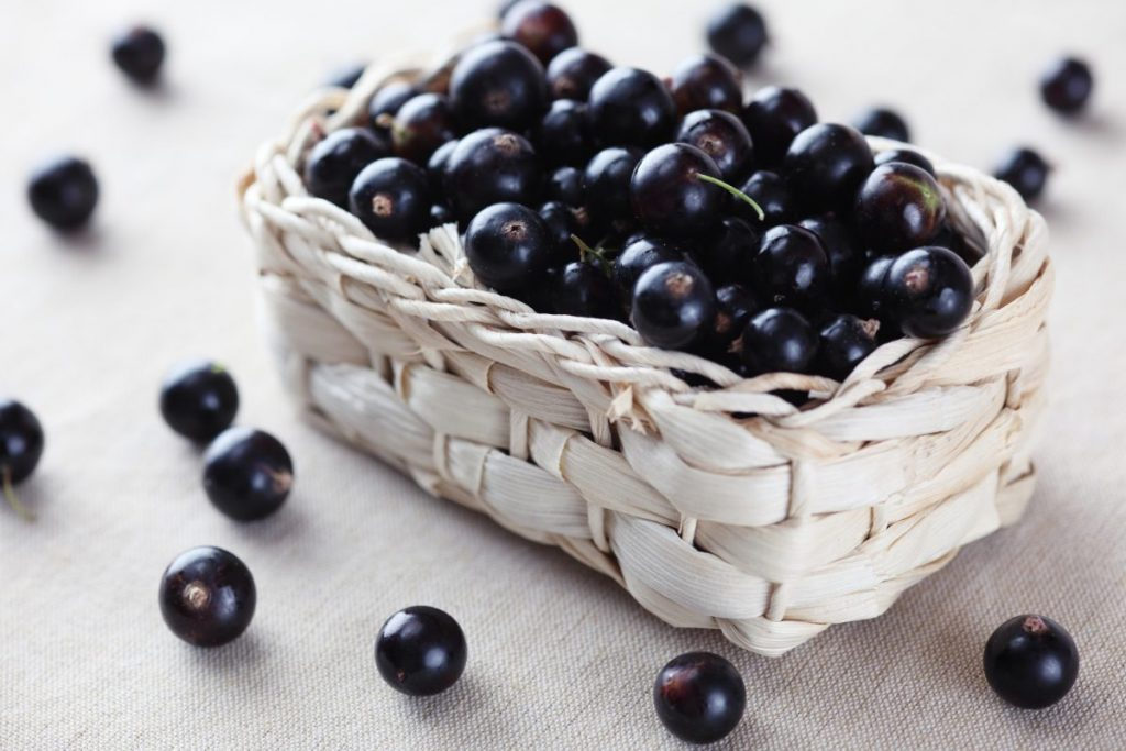 benefits of blackcurrants