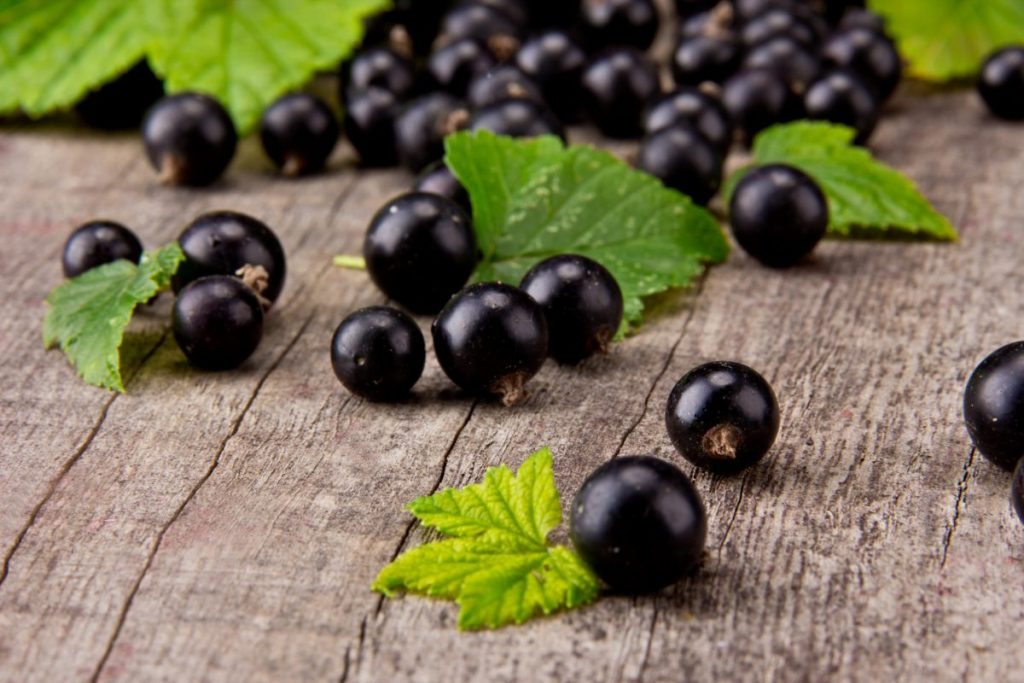 infection blackcurrants