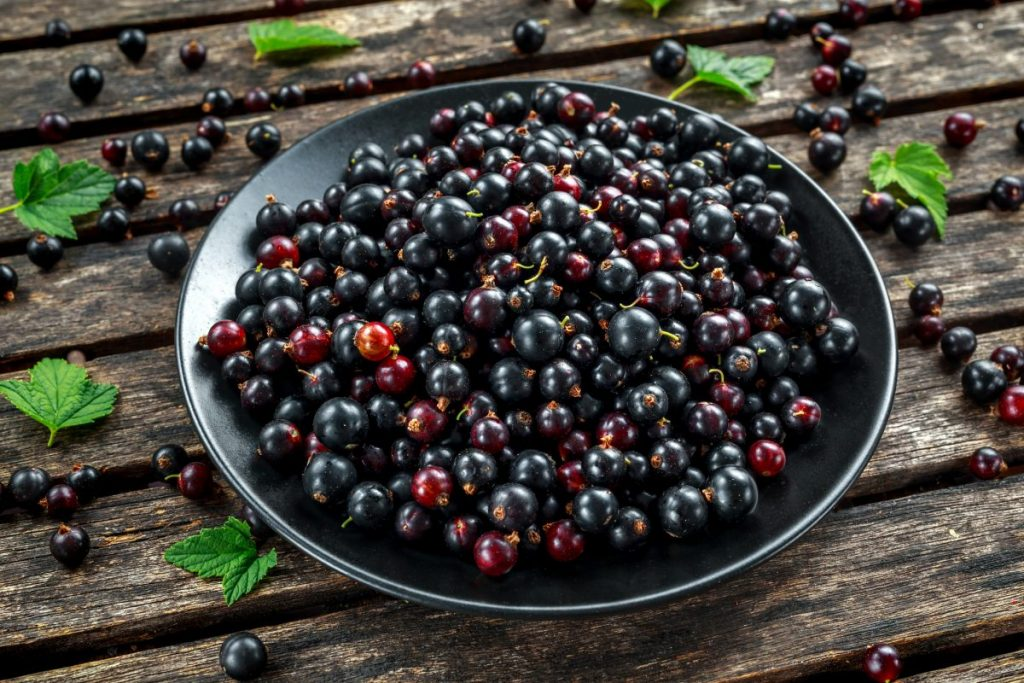 eye health blackcurrants