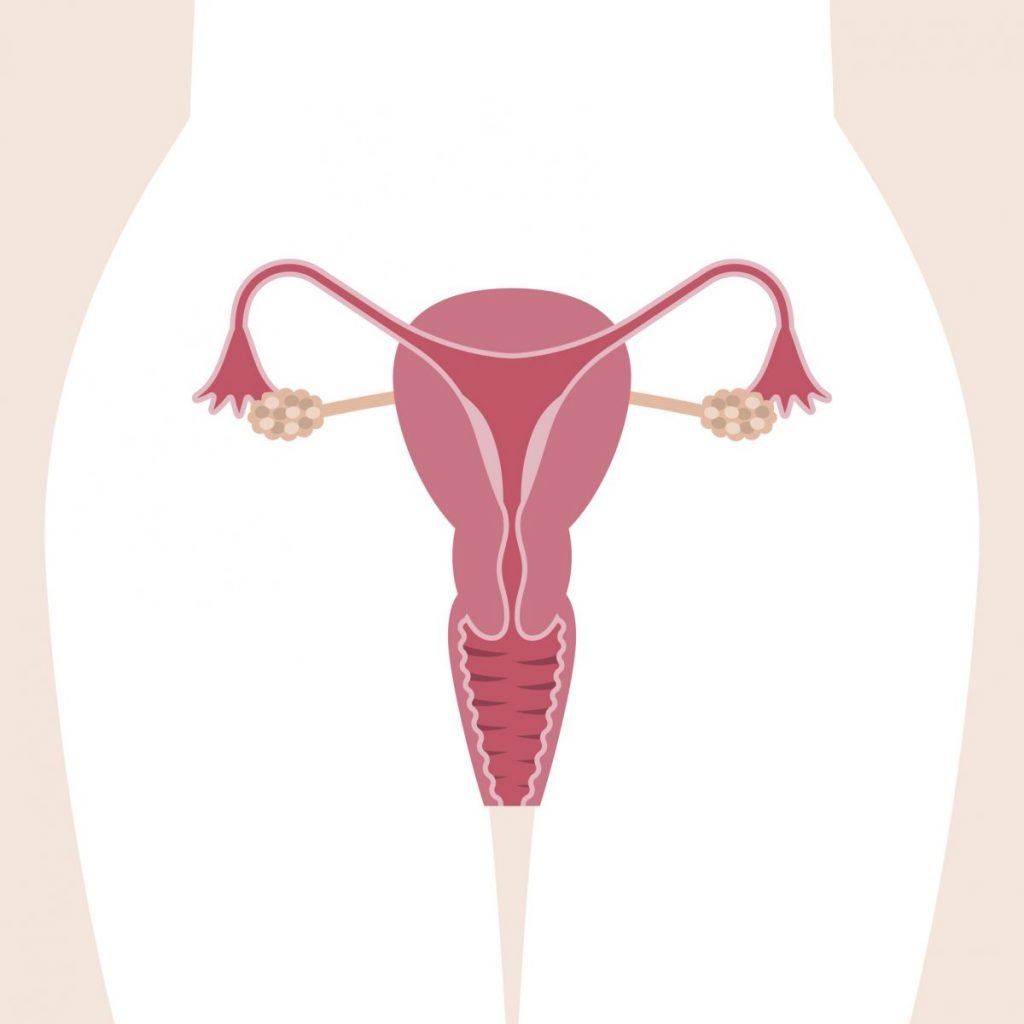 what is proliferative endometrium