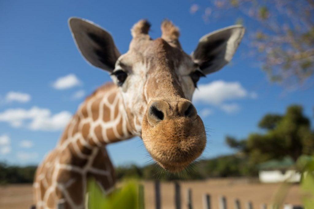 safari animal kingdom