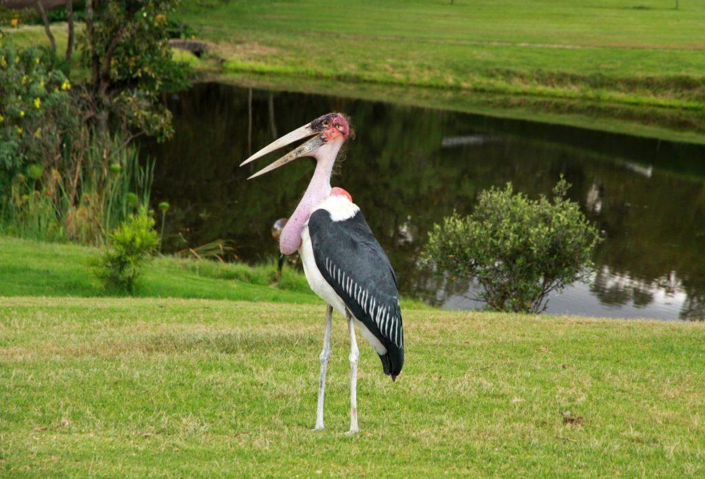 birds animal kingdom