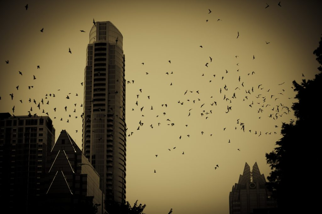 Halloween - Free-tail bats Austin Texas
