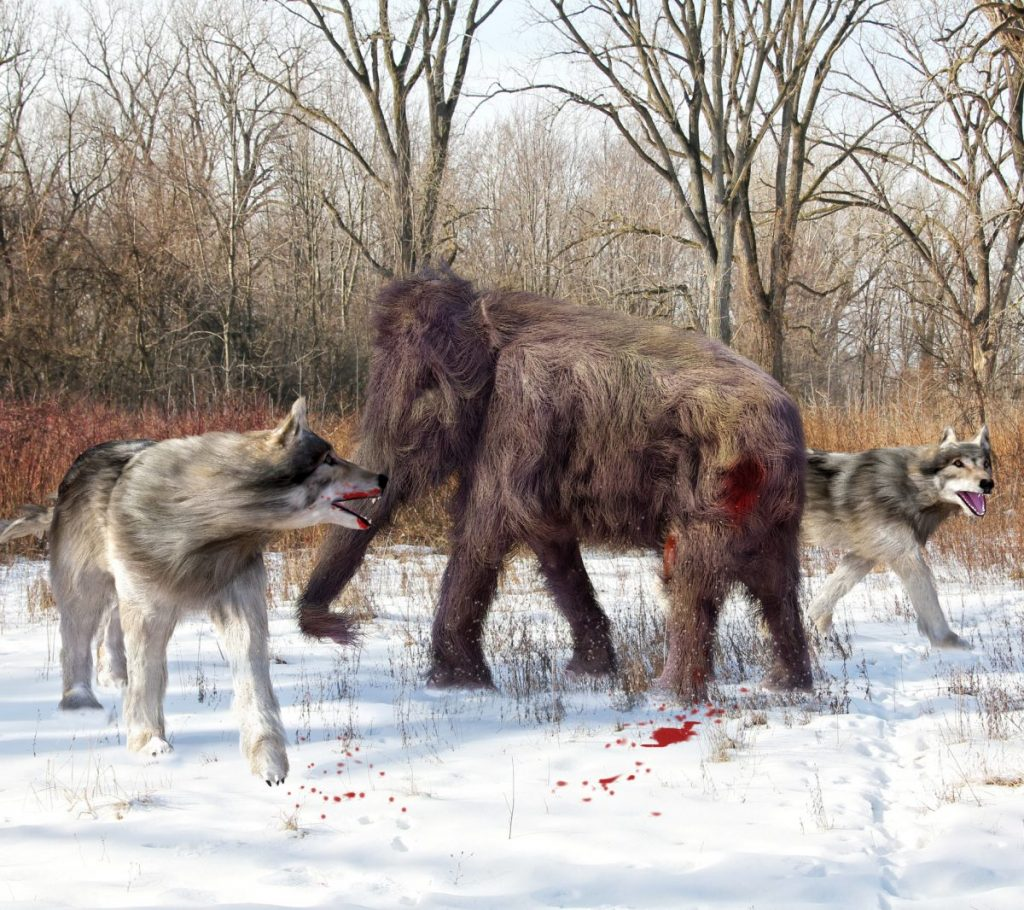 Dire Wolf pictures