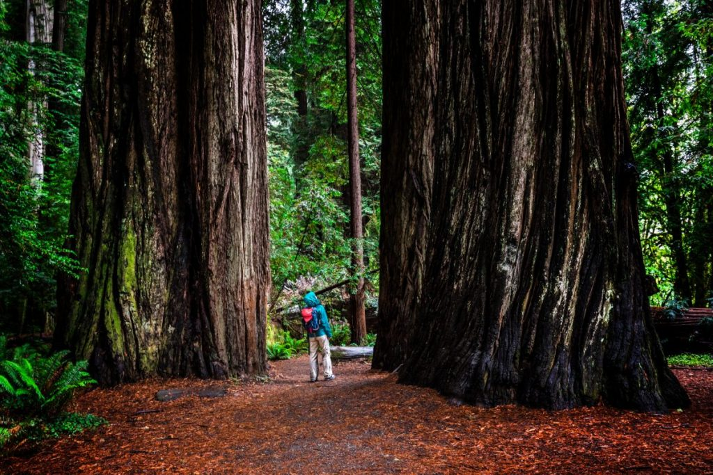 national redwood park