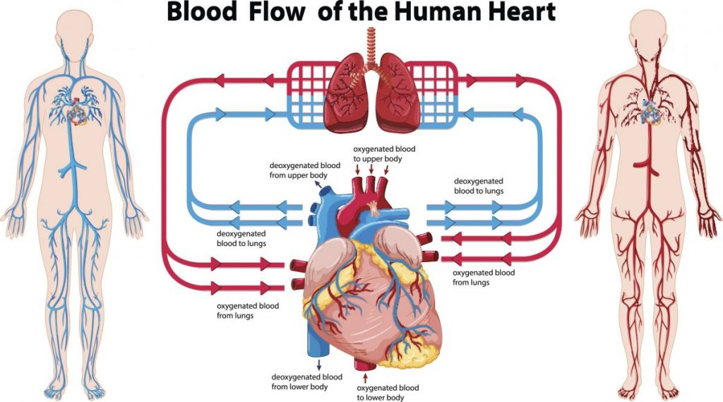 what is Ventricular fibrillation