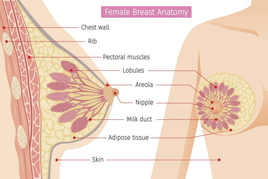 what is breast infection