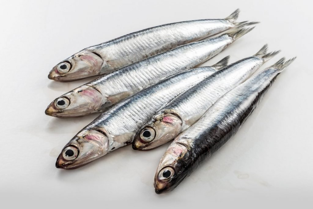 fish gout worst foods