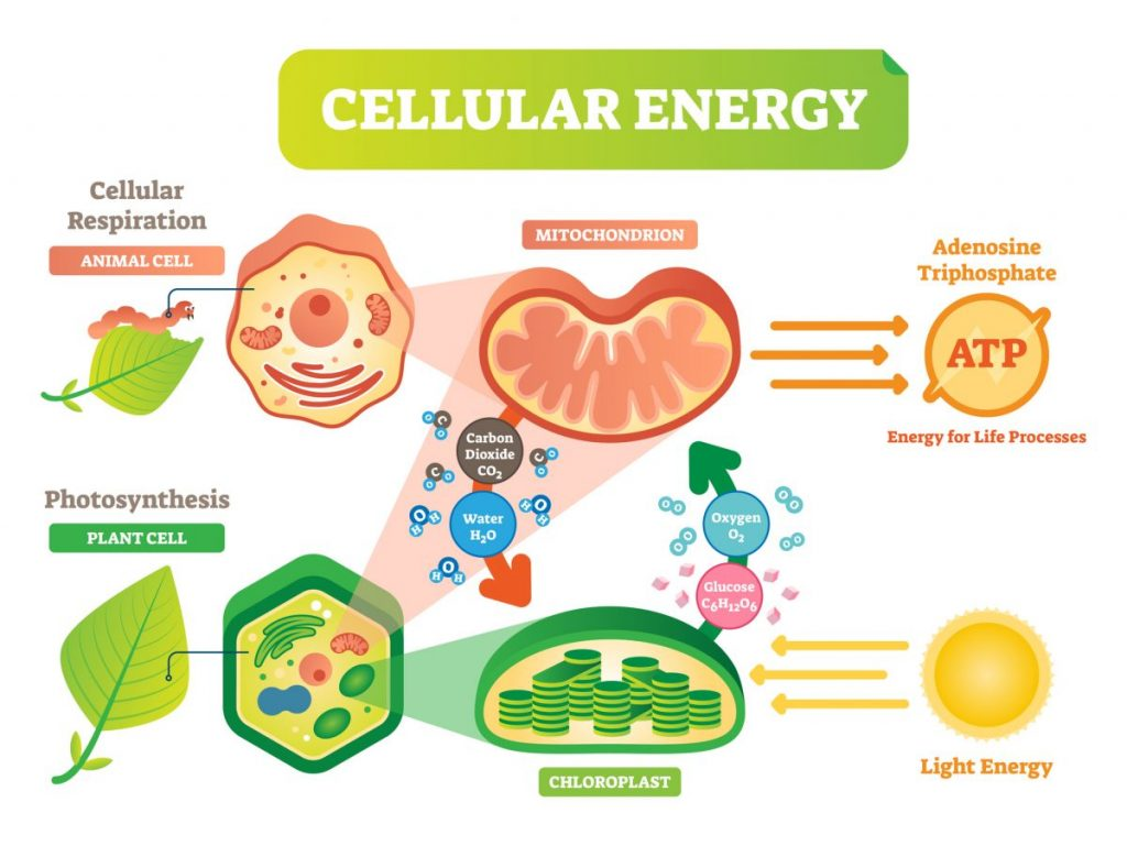 energy Cell theory