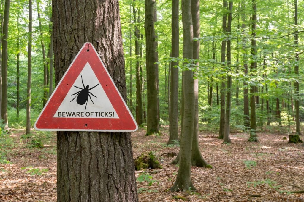 complications of lyme disease
