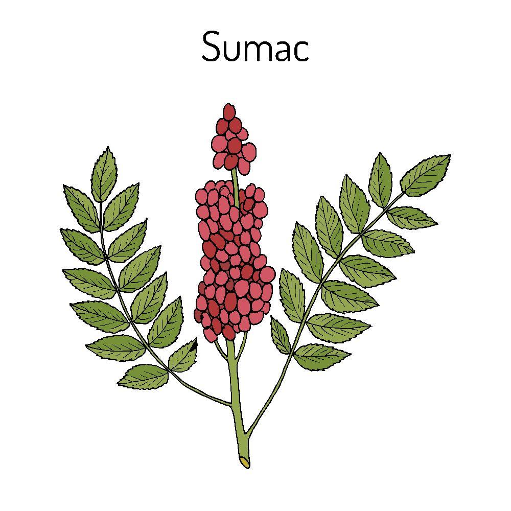 What is a Poison Sumac Rash?