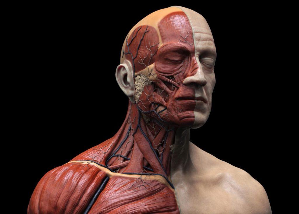 skin fascia