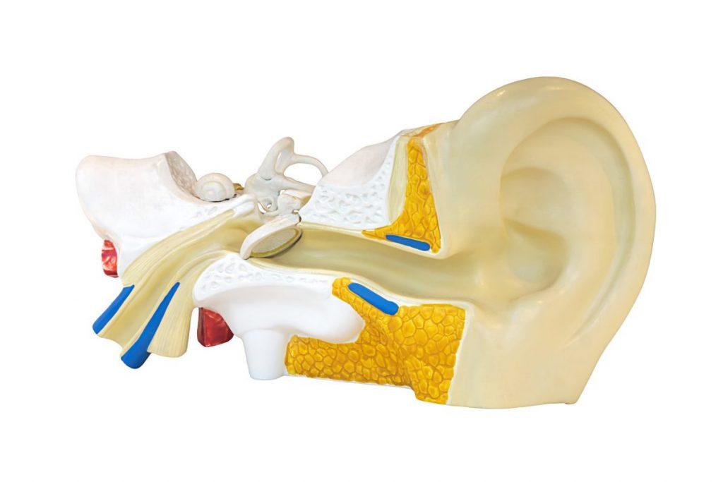 object in the ear